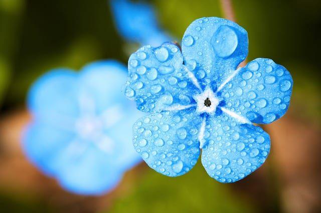 水に濡れた花